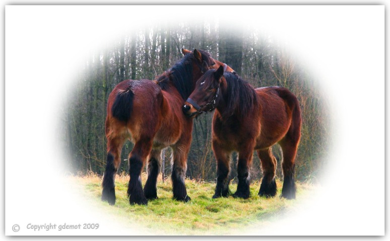 paardekracht