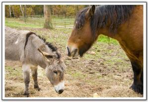 Paard en Ezel in het freilichtmuseum kommern
