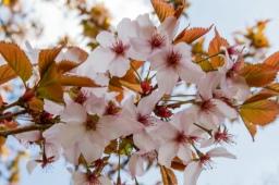 Arboretum – Bloesems