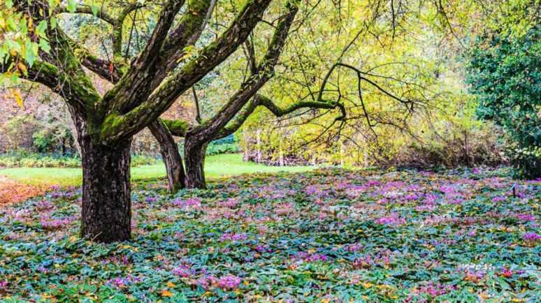 arboretum-bokrijk